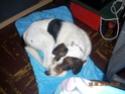 ADHOC, croisé beagle/griffon mâle, 5 ans 1/2 (56) - Page 2 Sylvie14