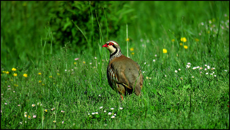 Forum oiseaux de la nature et sauvages: Nos p'tits copains à plume - Portail X095010