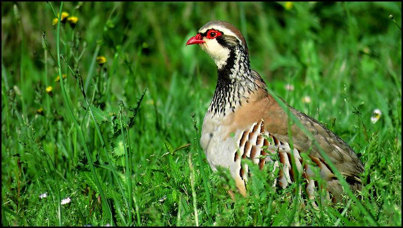Forum oiseaux de la nature et sauvages: Nos p'tits copains à plume - Portail X096310