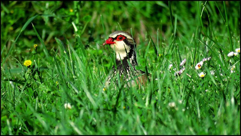 Forum oiseaux de la nature et sauvages: Nos p'tits copains à plume - Portail X097311