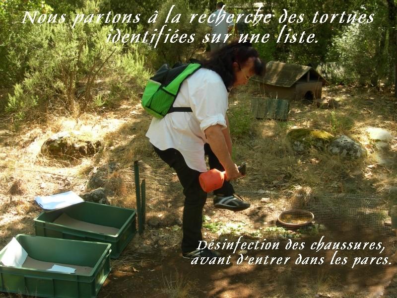Pour les amoureux des tortues Hermann : stage au village des tortues de Gonfaron (Sud de la France) Fer_s100