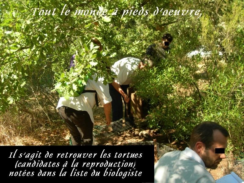 Pour les amoureux des tortues Hermann : stage au village des tortues de Gonfaron (Sud de la France) Fer_s101