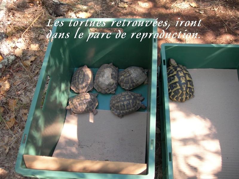 Pour les amoureux des tortues Hermann : stage au village des tortues de Gonfaron (Sud de la France) Fer_s102