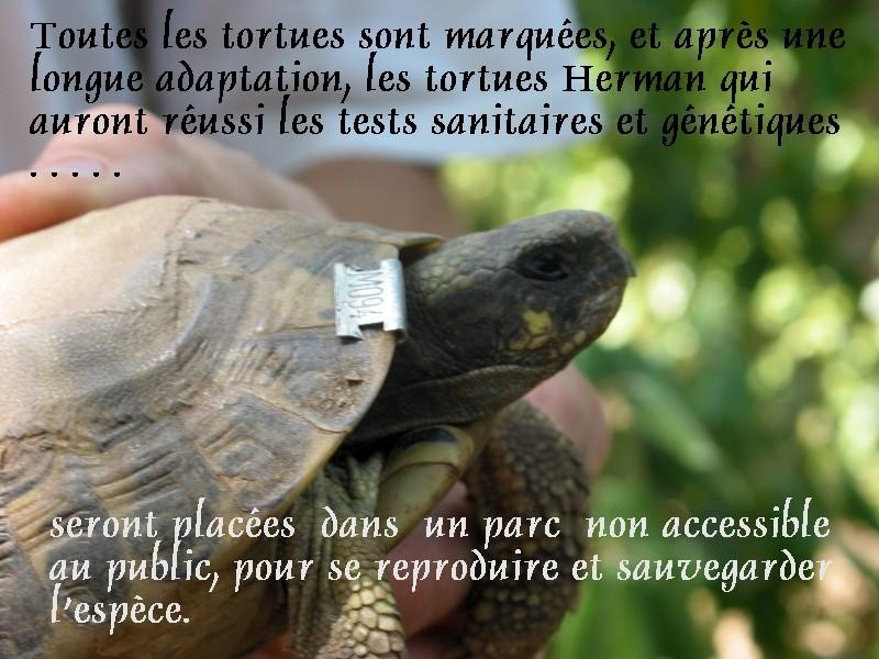 Pour les amoureux des tortues Hermann : stage au village des tortues de Gonfaron (Sud de la France) Fer_s103