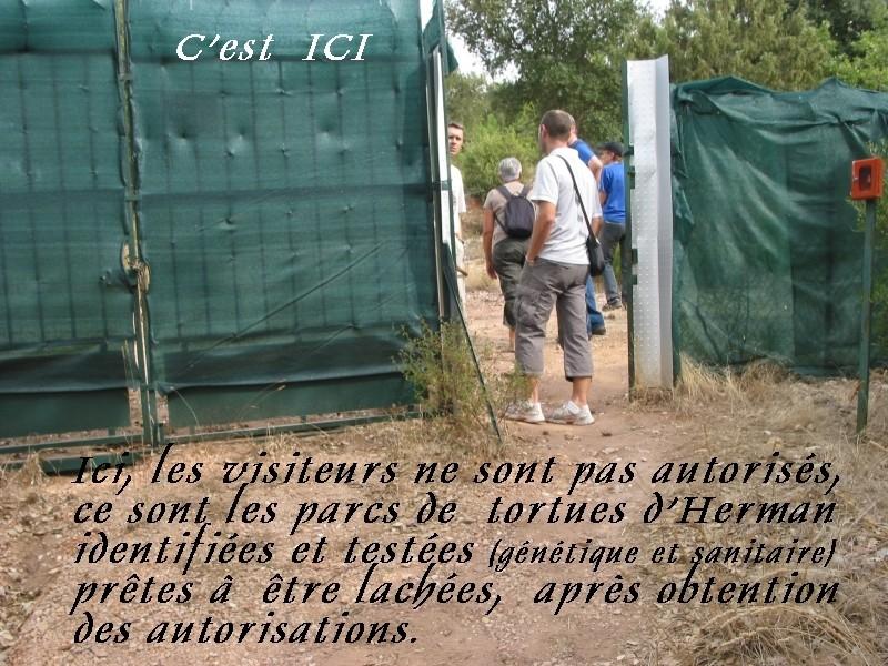 Pour les amoureux des tortues Hermann : stage au village des tortues de Gonfaron (Sud de la France) Fer_s104