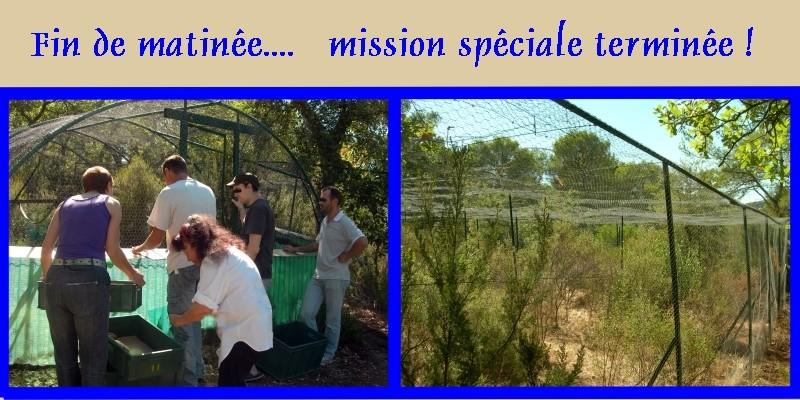 Pour les amoureux des tortues Hermann : stage au village des tortues de Gonfaron (Sud de la France) Fer_s106