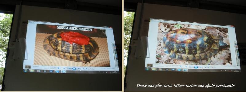Pour les amoureux des tortues Hermann : stage au village des tortues de Gonfaron (Sud de la France) Fer_s113