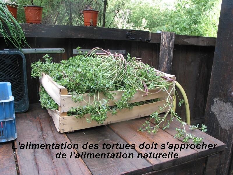 Pour les amoureux des tortues Hermann : stage au village des tortues de Gonfaron (Sud de la France) Fer_s115