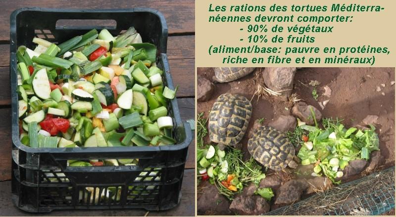 Pour les amoureux des tortues Hermann : stage au village des tortues de Gonfaron (Sud de la France) Fer_s117