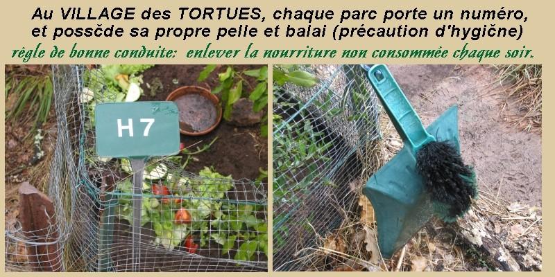 Pour les amoureux des tortues Hermann : stage au village des tortues de Gonfaron (Sud de la France) Fer_s118