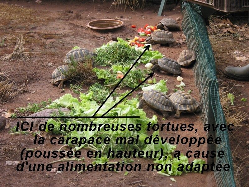Pour les amoureux des tortues Hermann : stage au village des tortues de Gonfaron (Sud de la France) Fer_s119