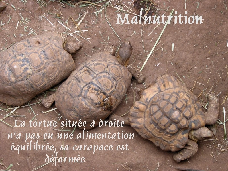 Pour les amoureux des tortues Hermann : stage au village des tortues de Gonfaron (Sud de la France) Fer_s120