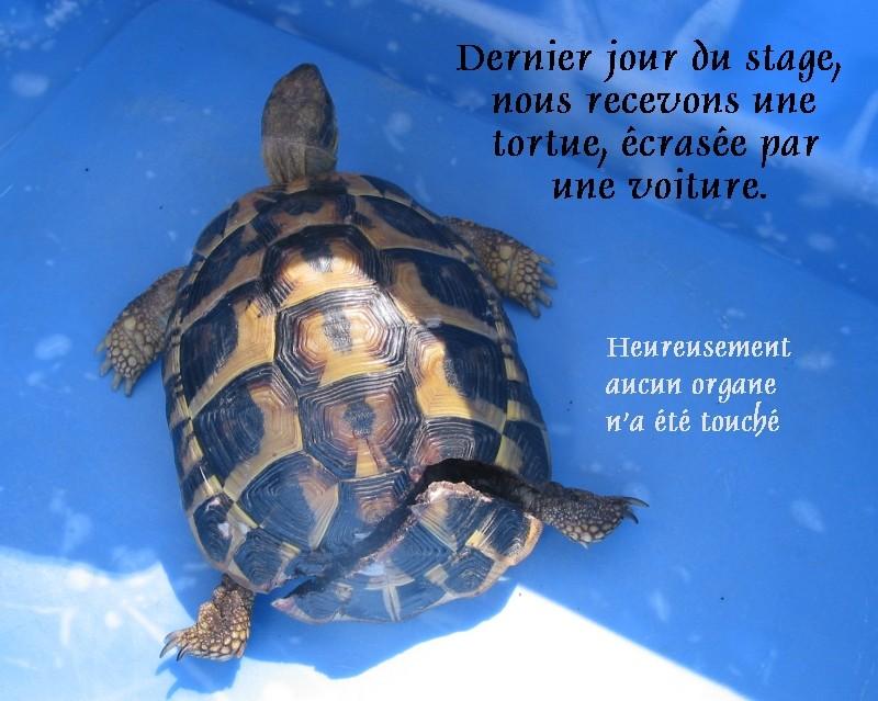 Pour les amoureux des tortues Hermann : stage au village des tortues de Gonfaron (Sud de la France) Fer_s121