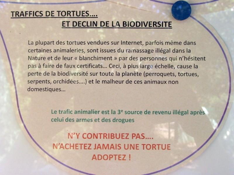 Pour les amoureux des tortues Hermann : stage au village des tortues de Gonfaron (Sud de la France) Fer_s124