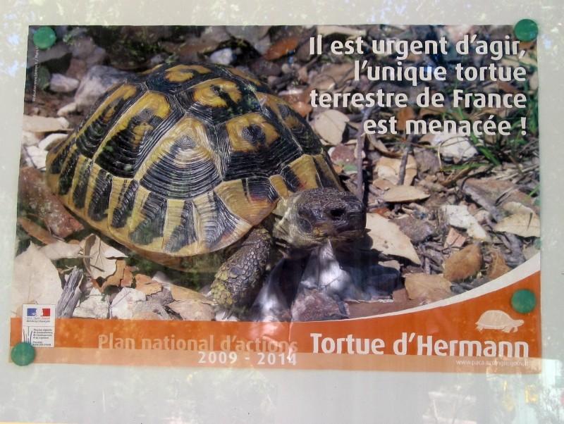 Pour les amoureux des tortues Hermann : stage au village des tortues de Gonfaron (Sud de la France) Fer_s126