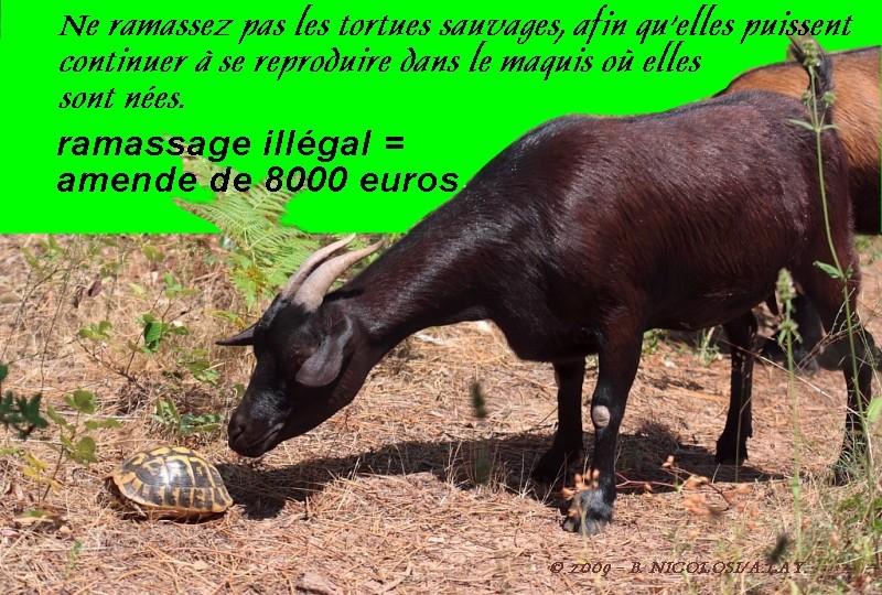 Pour les amoureux des tortues Hermann : stage au village des tortues de Gonfaron (Sud de la France) Fer_s127