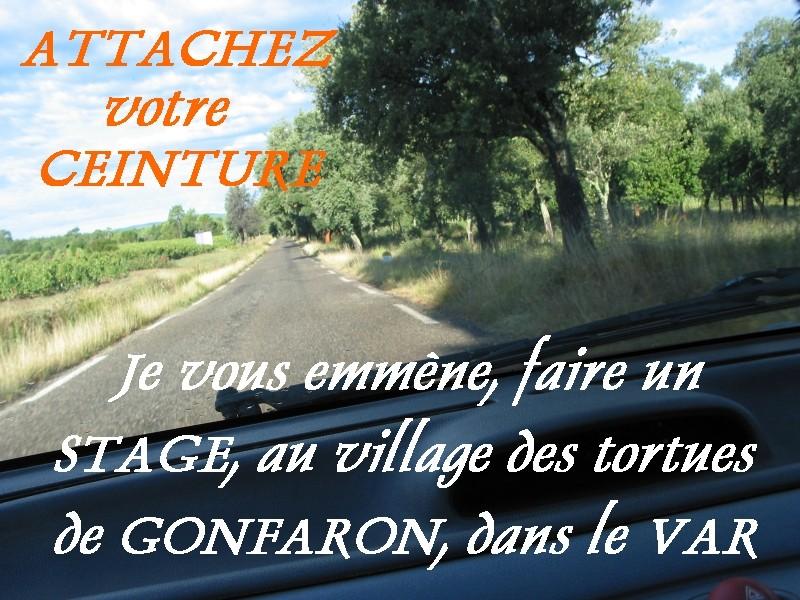 Pour les amoureux des tortues Hermann : stage au village des tortues de Gonfaron (Sud de la France) Fer_st10
