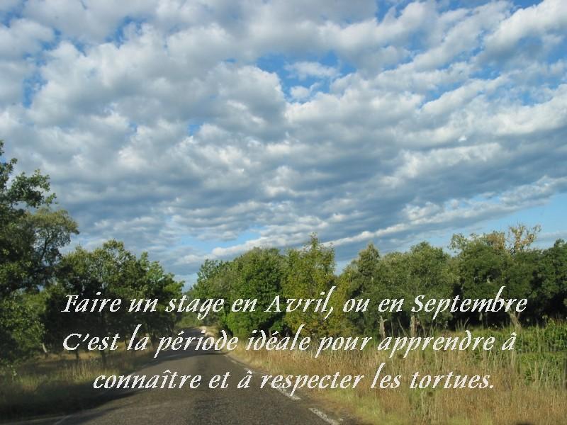 Pour les amoureux des tortues Hermann : stage au village des tortues de Gonfaron (Sud de la France) Fer_st11
