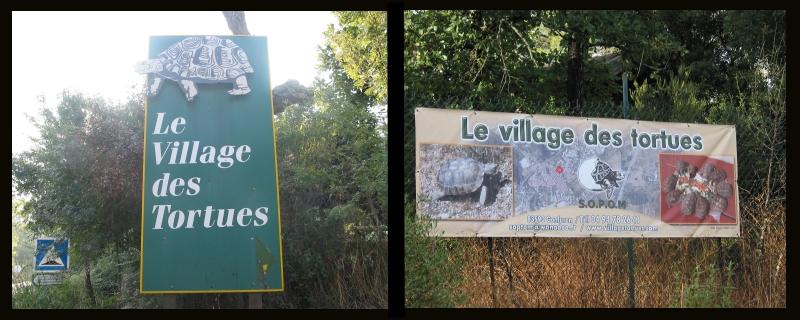Pour les amoureux des tortues Hermann : stage au village des tortues de Gonfaron (Sud de la France) Fer_st13