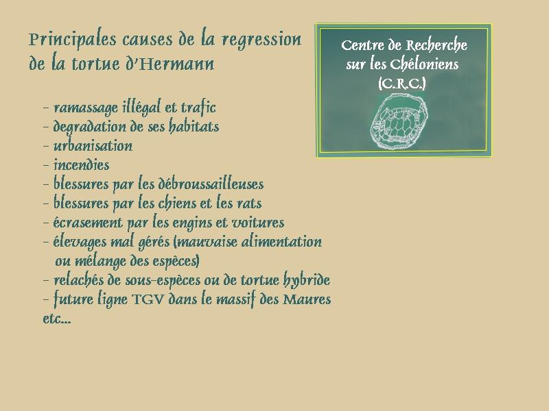 Pour les amoureux des tortues Hermann : stage au village des tortues de Gonfaron (Sud de la France) Fer_st20
