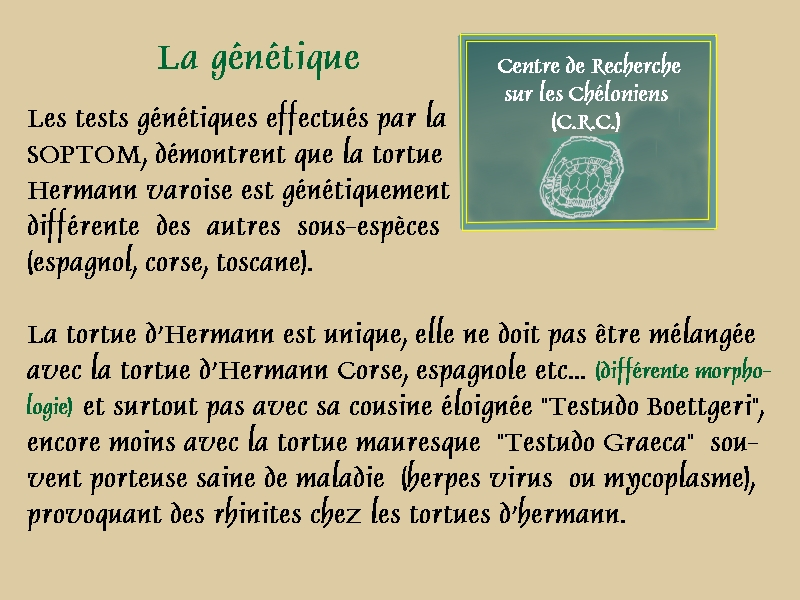 Pour les amoureux des tortues Hermann : stage au village des tortues de Gonfaron (Sud de la France) Fer_st21