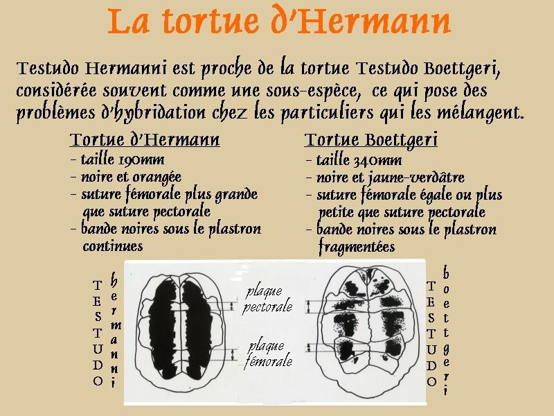 Pour les amoureux des tortues Hermann : stage au village des tortues de Gonfaron (Sud de la France) Fer_st22