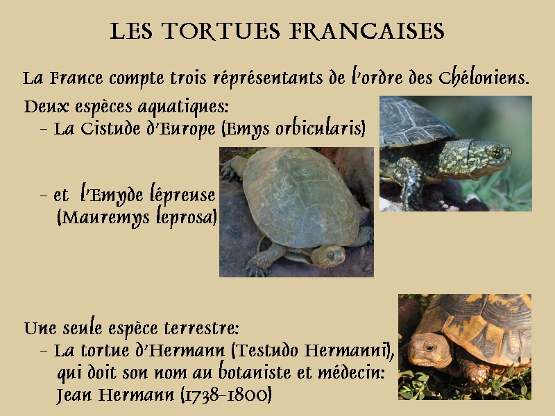 Pour les amoureux des tortues Hermann : stage au village des tortues de Gonfaron (Sud de la France) Fer_st23