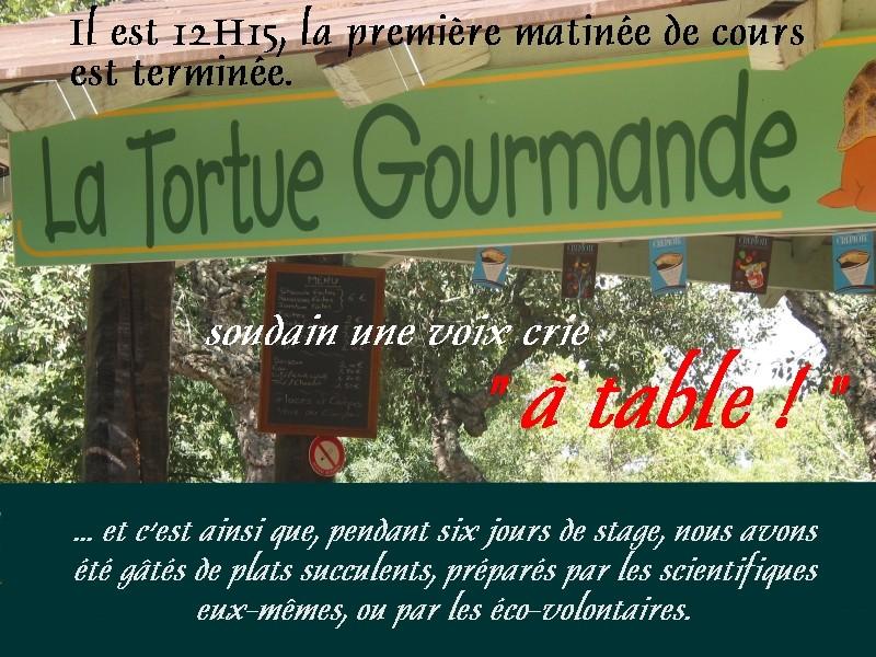 Pour les amoureux des tortues Hermann : stage au village des tortues de Gonfaron (Sud de la France) Fer_st24