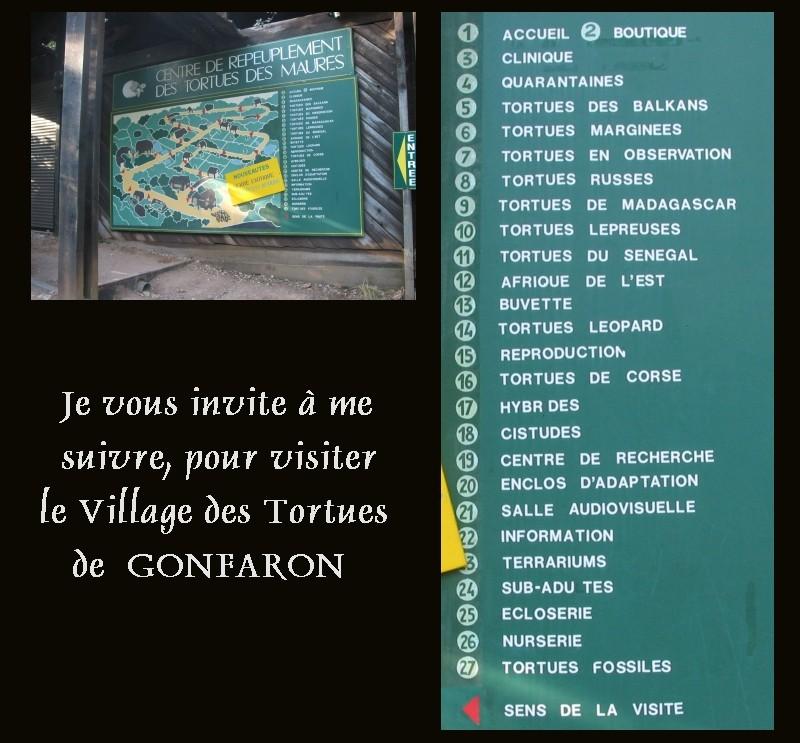 Pour les amoureux des tortues Hermann : stage au village des tortues de Gonfaron (Sud de la France) Fer_st28