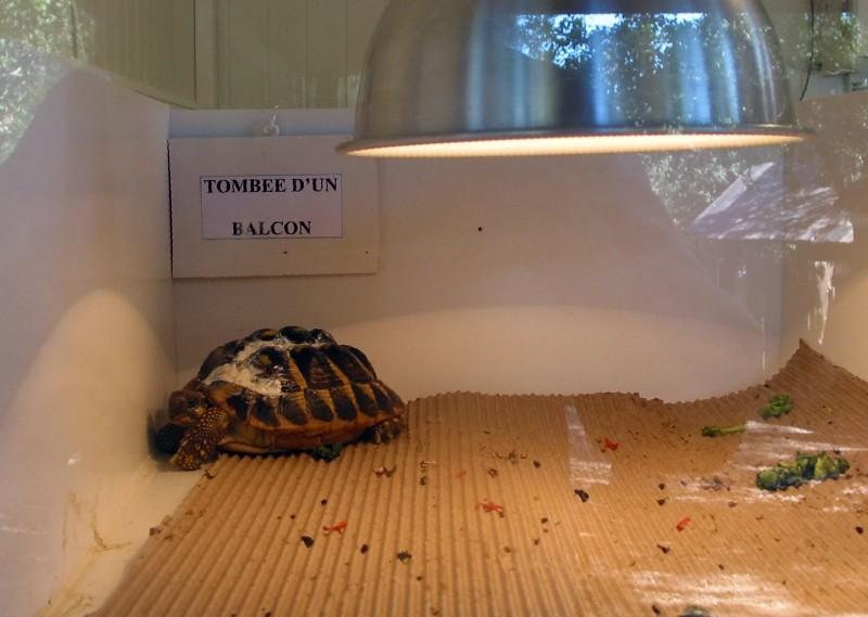 Pour les amoureux des tortues Hermann : stage au village des tortues de Gonfaron (Sud de la France) Fer_st30