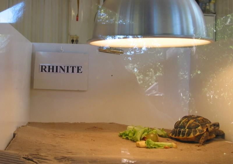 Pour les amoureux des tortues Hermann : stage au village des tortues de Gonfaron (Sud de la France) Fer_st31
