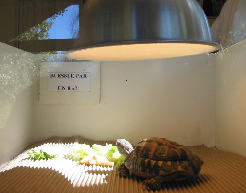 Pour les amoureux des tortues Hermann : stage au village des tortues de Gonfaron (Sud de la France) Fer_st33