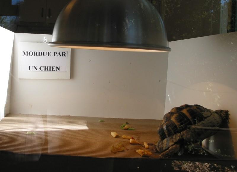 Pour les amoureux des tortues Hermann : stage au village des tortues de Gonfaron (Sud de la France) Fer_st34