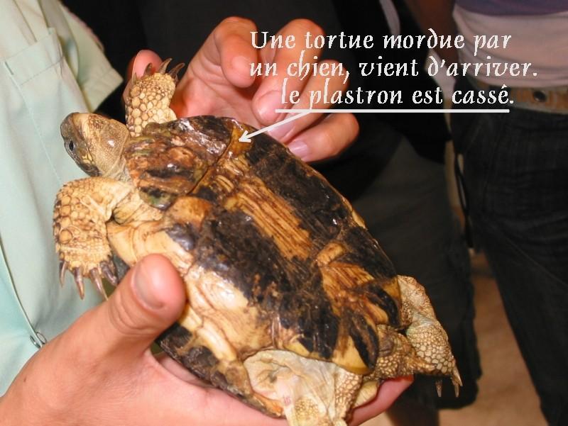 Pour les amoureux des tortues Hermann : stage au village des tortues de Gonfaron (Sud de la France) Fer_st35