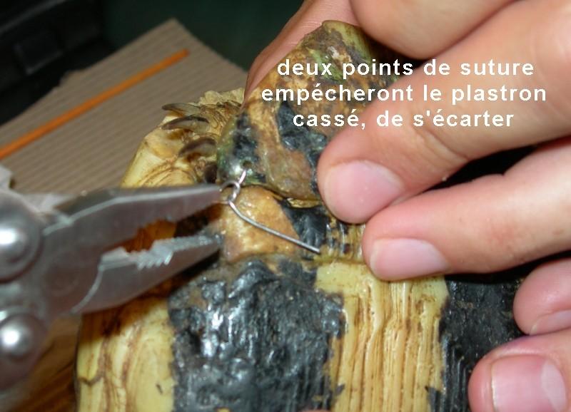 Pour les amoureux des tortues Hermann : stage au village des tortues de Gonfaron (Sud de la France) Fer_st36