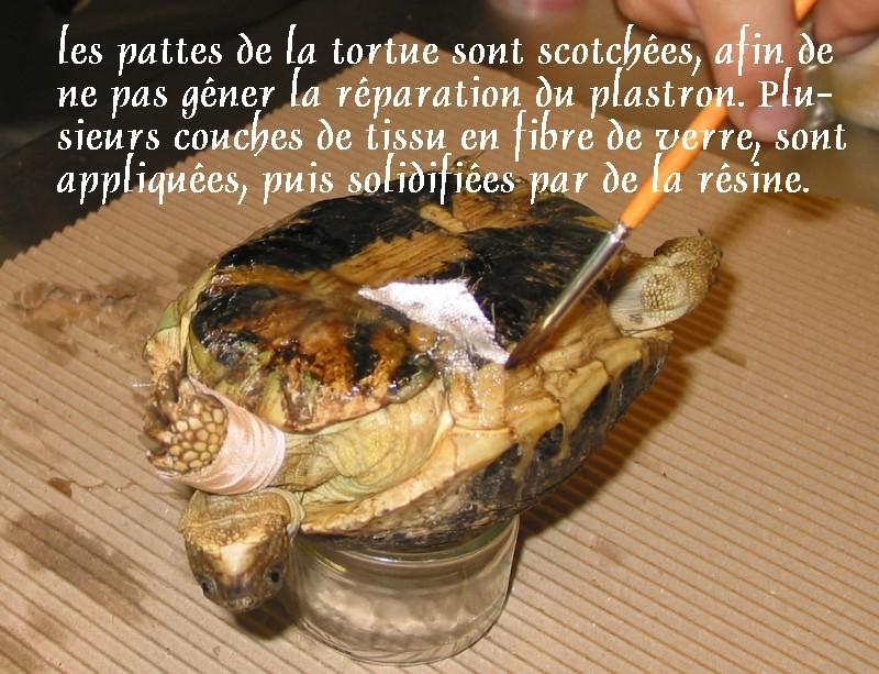 Pour les amoureux des tortues Hermann : stage au village des tortues de Gonfaron (Sud de la France) Fer_st37