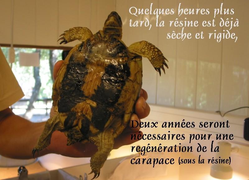 Pour les amoureux des tortues Hermann : stage au village des tortues de Gonfaron (Sud de la France) Fer_st38