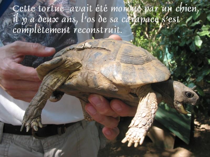 Pour les amoureux des tortues Hermann : stage au village des tortues de Gonfaron (Sud de la France) Fer_st39