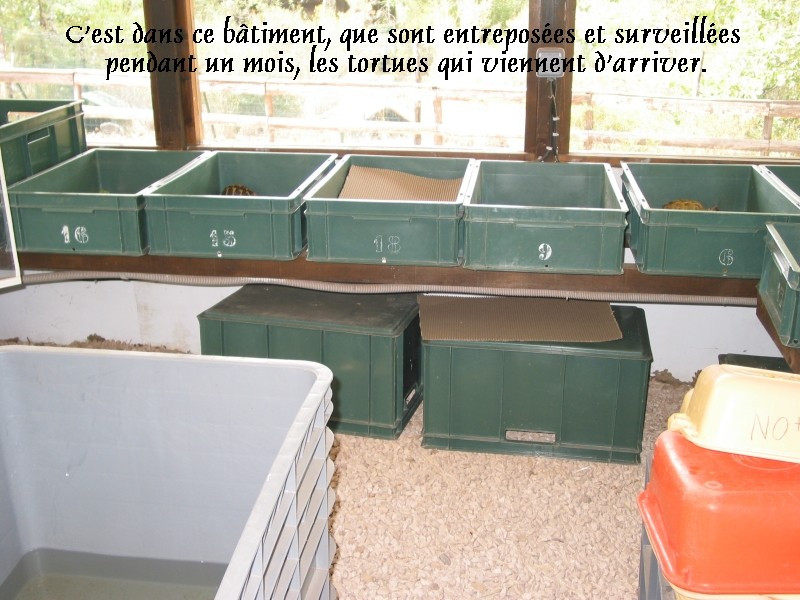 Pour les amoureux des tortues Hermann : stage au village des tortues de Gonfaron (Sud de la France) Fer_st42