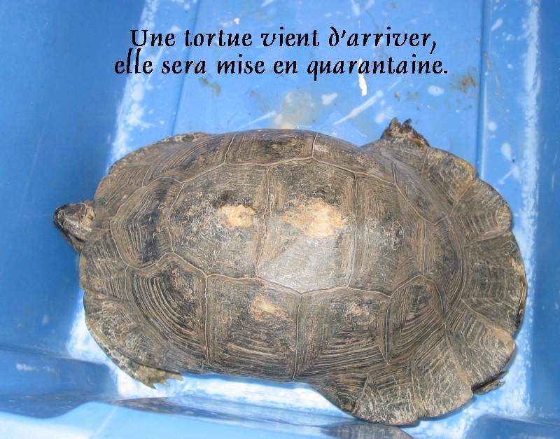 Pour les amoureux des tortues Hermann : stage au village des tortues de Gonfaron (Sud de la France) Fer_st43