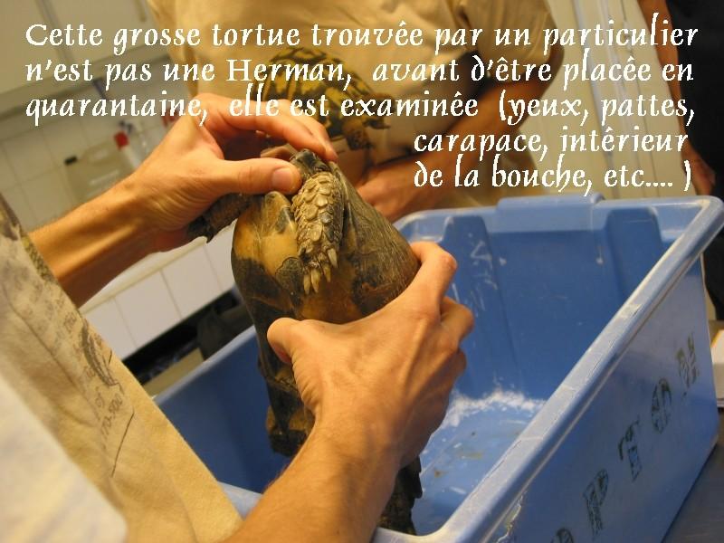 Pour les amoureux des tortues Hermann : stage au village des tortues de Gonfaron (Sud de la France) Fer_st44