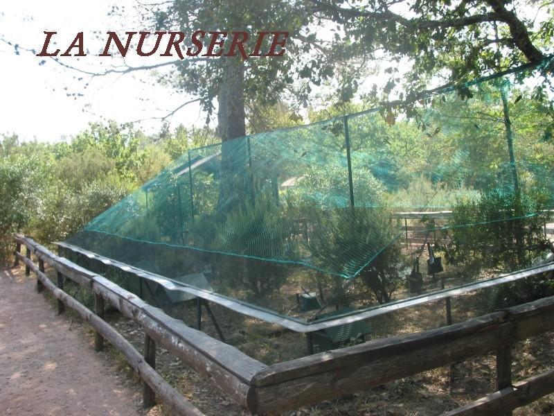 Pour les amoureux des tortues Hermann : stage au village des tortues de Gonfaron (Sud de la France) Fer_st46