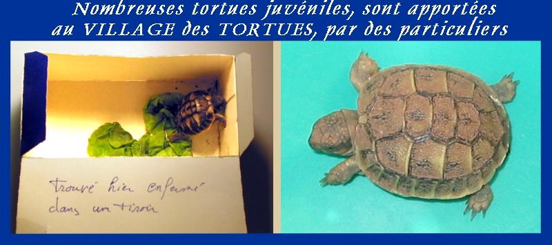 Pour les amoureux des tortues Hermann : stage au village des tortues de Gonfaron (Sud de la France) Fer_st47