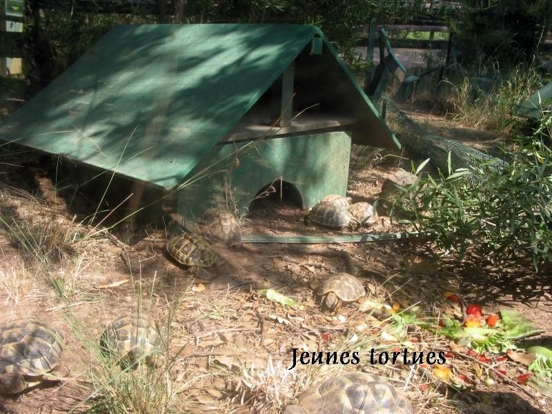 Pour les amoureux des tortues Hermann : stage au village des tortues de Gonfaron (Sud de la France) Fer_st48