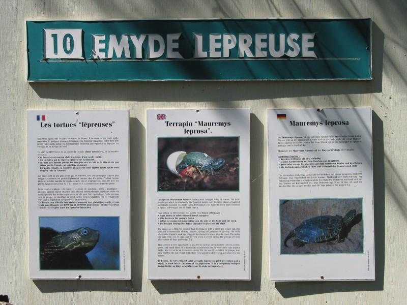 Pour les amoureux des tortues Hermann : stage au village des tortues de Gonfaron (Sud de la France) Fer_st50