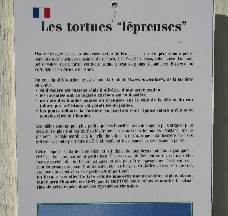 Pour les amoureux des tortues Hermann : stage au village des tortues de Gonfaron (Sud de la France) Fer_st51