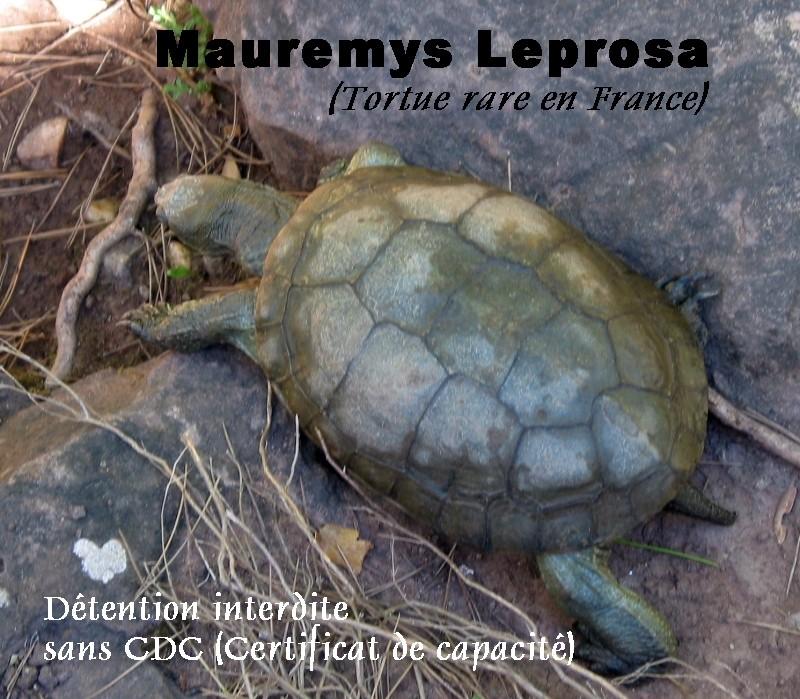 Pour les amoureux des tortues Hermann : stage au village des tortues de Gonfaron (Sud de la France) Fer_st52
