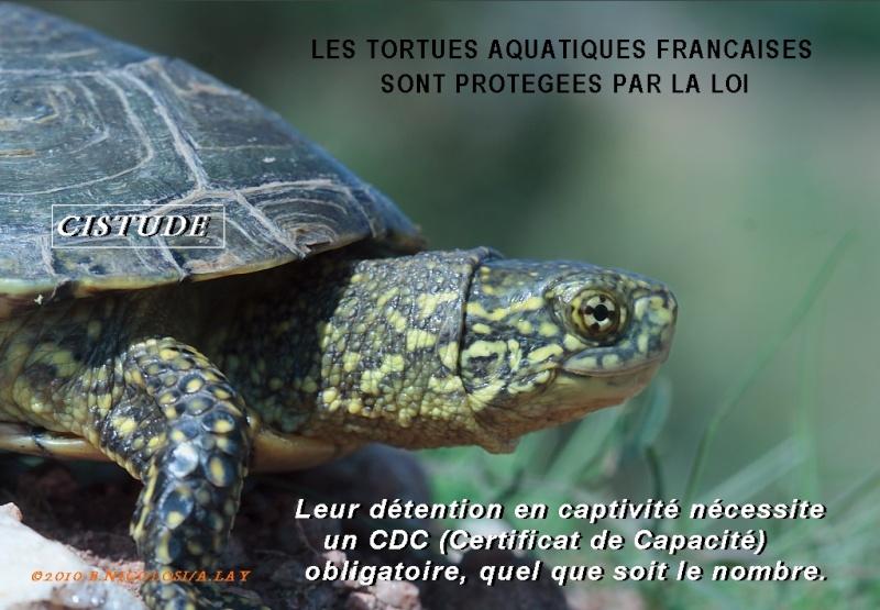 Pour les amoureux des tortues Hermann : stage au village des tortues de Gonfaron (Sud de la France) Fer_st54