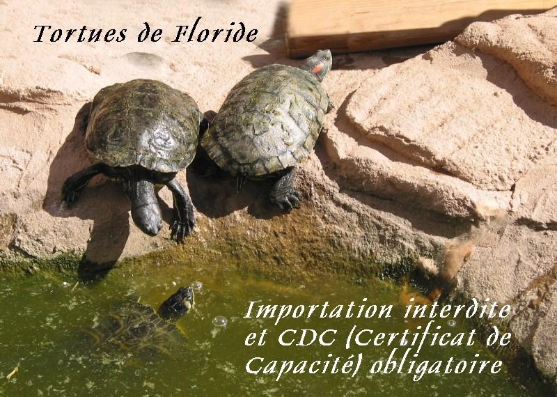 Pour les amoureux des tortues Hermann : stage au village des tortues de Gonfaron (Sud de la France) Fer_st57