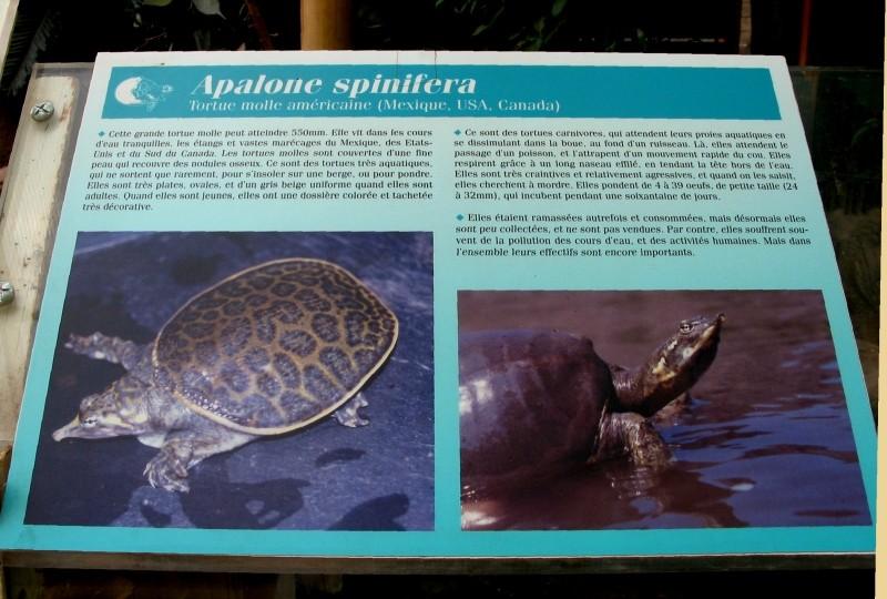 Pour les amoureux des tortues Hermann : stage au village des tortues de Gonfaron (Sud de la France) Fer_st59